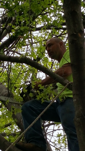 Joe Kelley of Kelley Tree Services