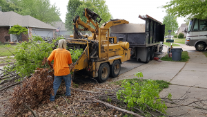 Stump Grinding and Tree Removal
