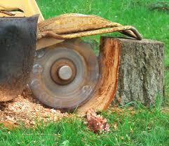 Tree Stump Grinder at work