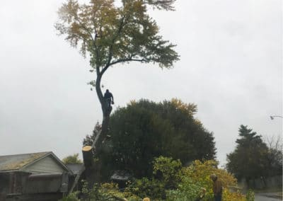 Tree Removal 1