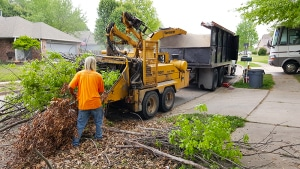 Tree Removal & Stump Grinding Services