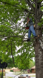 Tree Trimming and Tree Pruning Services