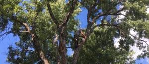 Tulsa #1 Tree Service Company