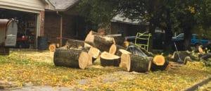 Tulsa Tree Services - Kelley Trees