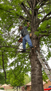 Tulsa Tree Trimming Experts
