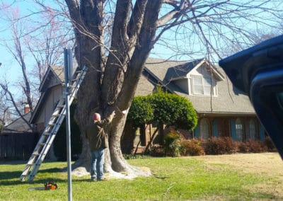 Kelley Tree Services 1