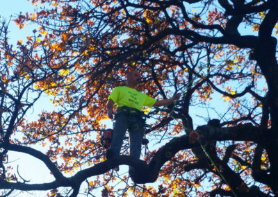 Kelley Tree Services 2