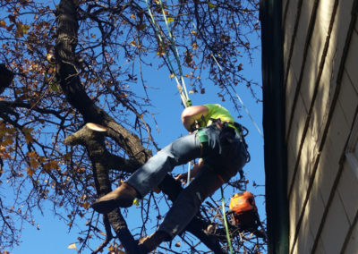 Tree Trimming Services 4