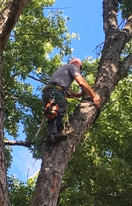 Tree Maintenance FAQ