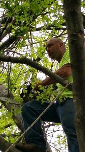 Tulsa Tree Service